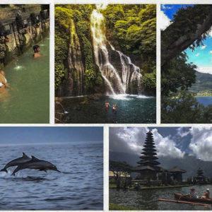 Dolphin Sunrise Tour 2