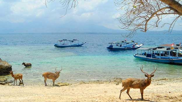 Menjangan Island, the Perfect Real Paradise in West Bali