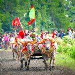 Makepung: Buffalo Race Final Cup In Bali 2018