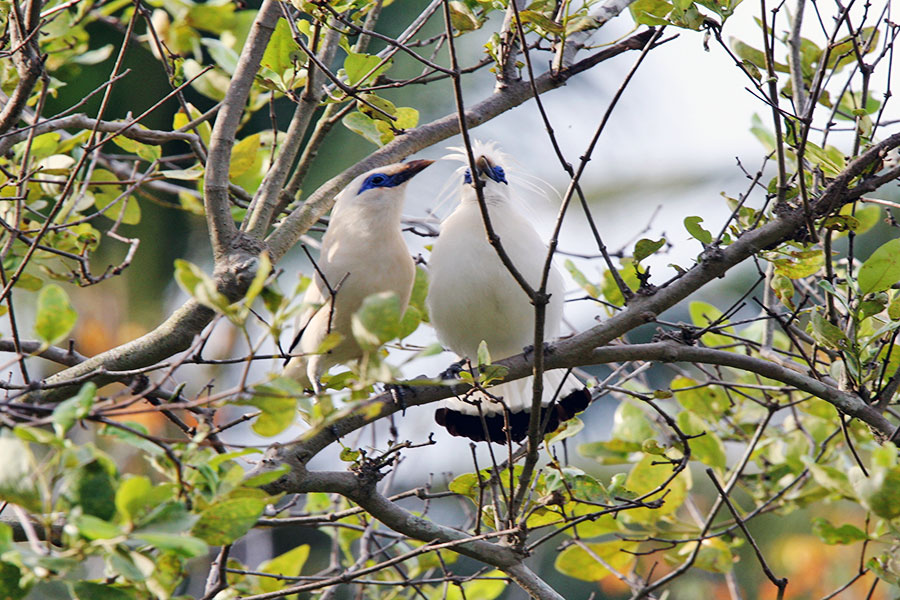 Bird Watching in Mangrove Forest