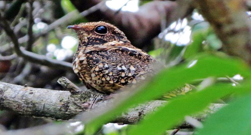 Bird Watching in Mangrove Forest