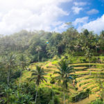 Tegalalang Rice Terrace Ubud Bali - Entrance fee and How to get Location.